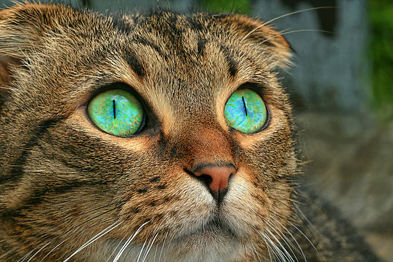 Pretty Cats With Blue Eyes